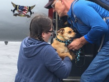 Nearly 100 at-risk shelter pets from the Dallas area arrived at King County International Airport/Boeing Field to be transferred to organizations in the Puget Sound, where they will find new, loving owners.